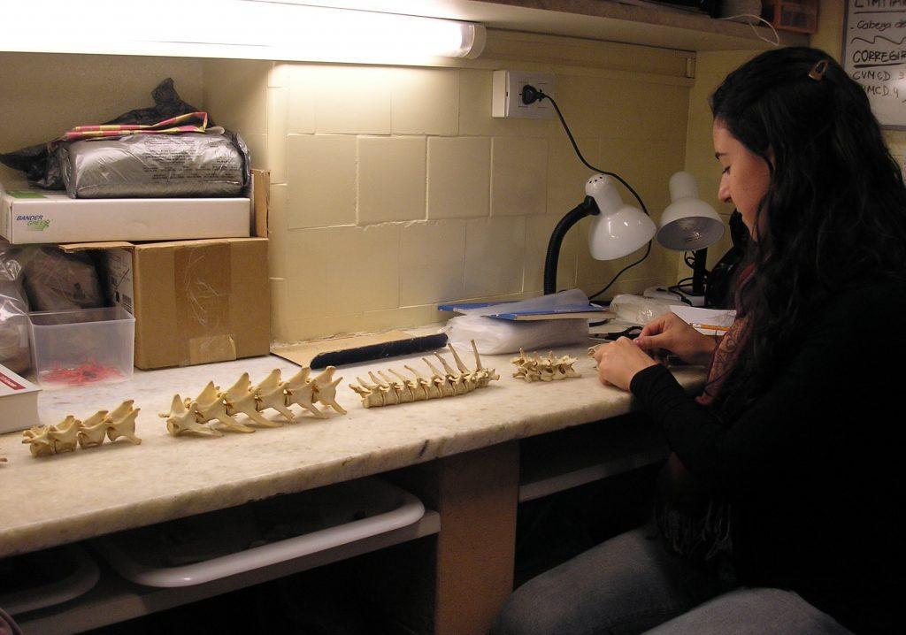 Laboratorio de Zooarqueología y Tafonomía de Zonas Áridas (LaZTA)