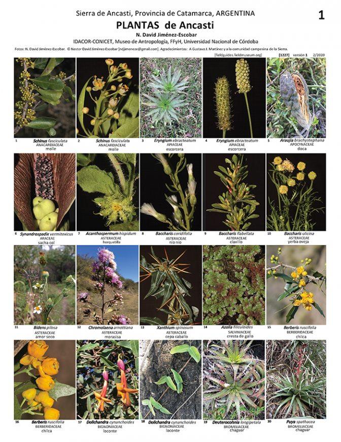 Una guía virtual con las plantas de Ancasti